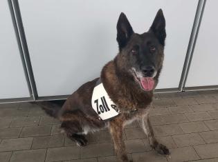 Zollhund Jacky zeigt Drogen an