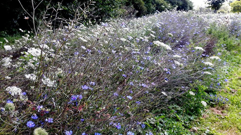 Die bunte Vielfalt heimischer Blüten.