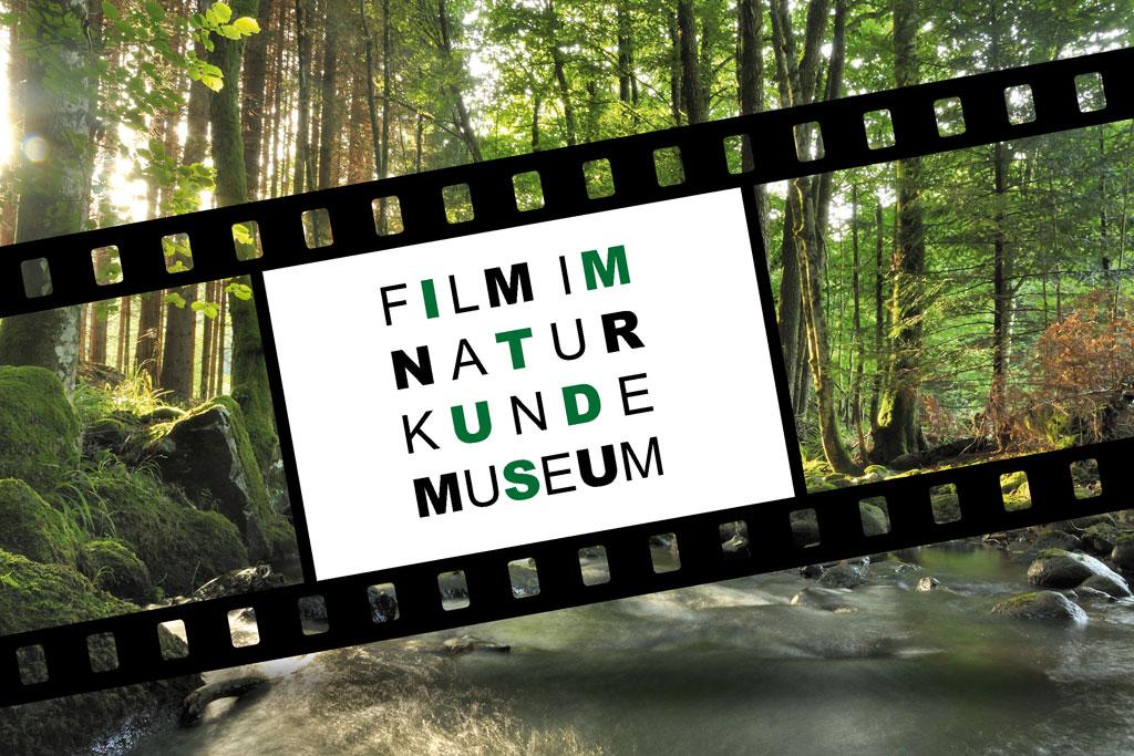 Symbolisch, Filmstreifen und Wald als Hintergrund